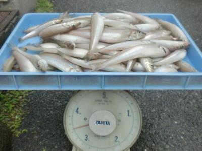 画像:T田さん、シロギス15.5~21.5cm×77尾+ピン×2尾=3.0kg