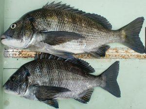 大磯釣り場案内 港H マンション下に釣り情報掲載