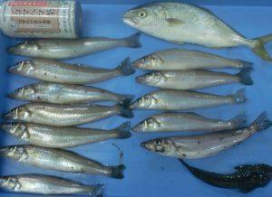 大磯釣り場案内 海岸4 幼稚園下に釣り情報掲載